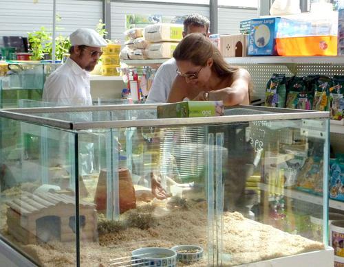 Брэд Питт и Анджелина Джоли в зоомагазине выбирают детям домашних животных