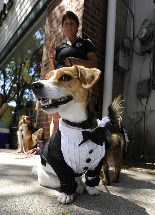 На свадебную церемонию нарядили даже собак