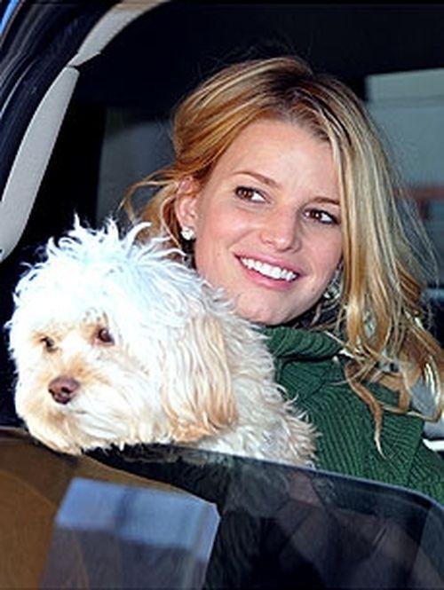 Джессика Симпсон и ее любимая собачка по кличке Дейзи