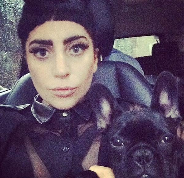 Леди Гага будет выпускать одежду для собак